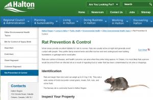 halton-rat-prevention