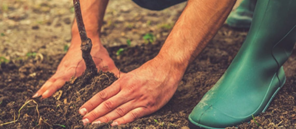 STOCK_tree planting